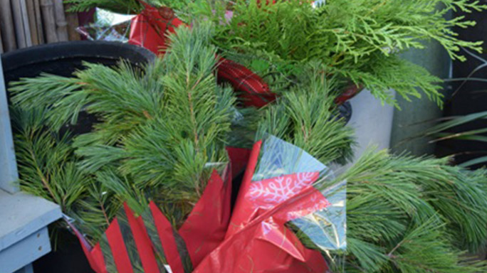 Fresh Evergreen Boughs